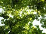 Pielęgnacja drzew, wykaszanie zarośli 601586913.