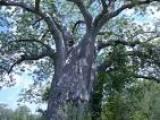 Wycinka drzew Wrocław 601 586 913